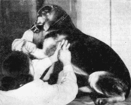 Болезни собак  i_002.jpg