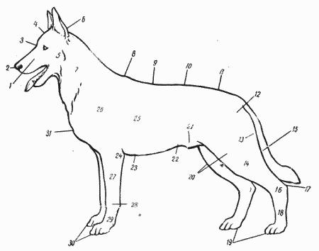 Справочная книга по собаководству i_001.png