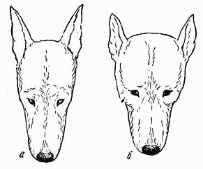 Справочная книга по собаководству i_002.png