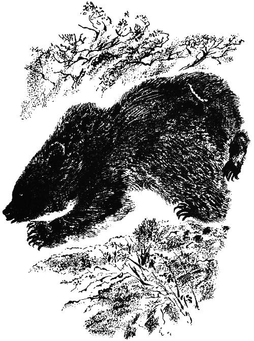 Сладков тень картинка